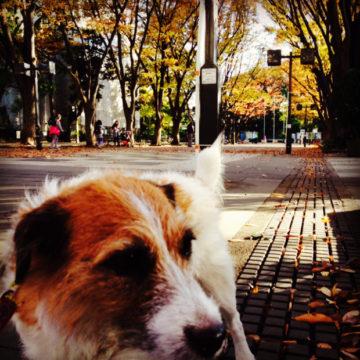 お散歩日和|世田谷区千歳船橋のペットクリニックなら桜丘動物病院の画像