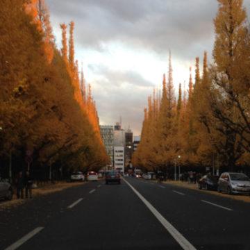 紅葉|世田谷区千歳船橋のペットクリニックなら桜丘動物病院の画像