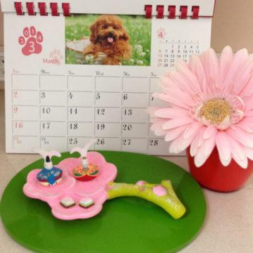 ひな祭り|世田谷区千歳船橋のペットクリニックなら桜丘動物病院の画像